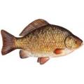 Рыба и рыбопродукты